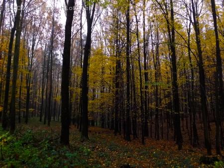 Listnatý les II.