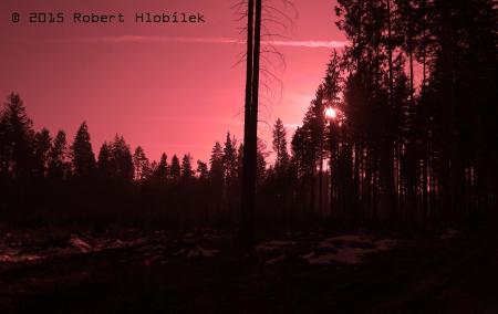 Strašidelný les