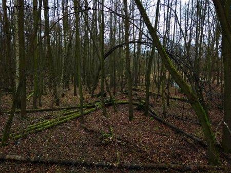 Prales kolem Kotvice