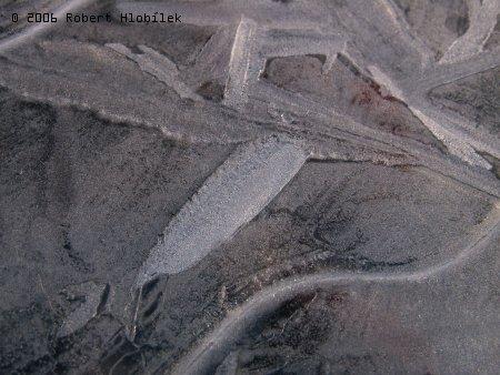 Zamrzlé kaluže