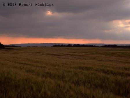 Obilné pole při večerní projížďce