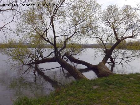 Rybník Nezmar