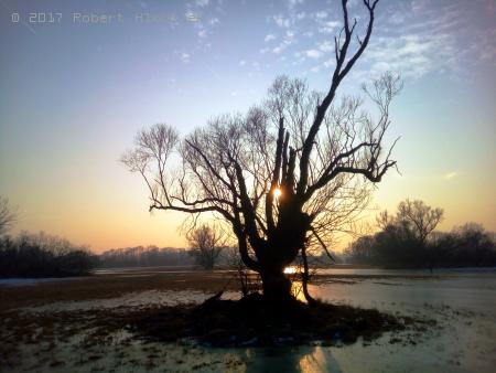 Starý osamělý strom