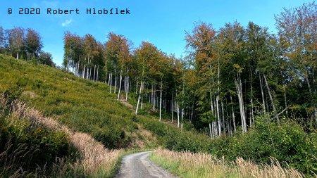 Bukové lesy nad obcí Chvalčov