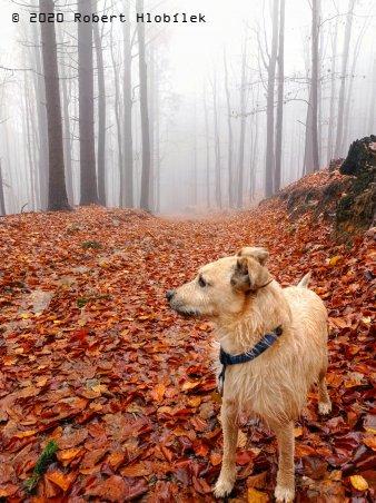 Mlhavé ráno v lese