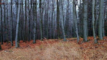 Konec listopadu na Ráztoce v lese