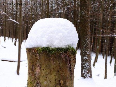 Už i v Hostýnkách mají pařezy sněhové čepice