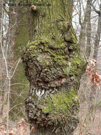 Nemocný strom