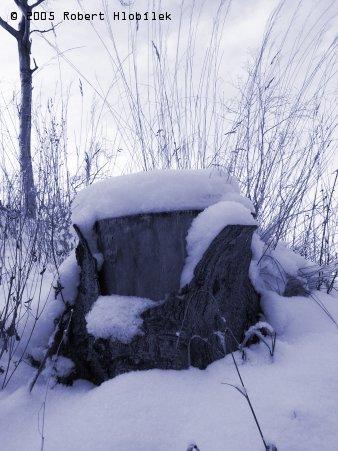 Pařez pod sněhem