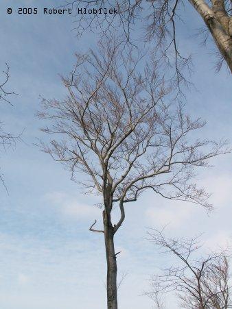 Pletence bukových větví byly všude