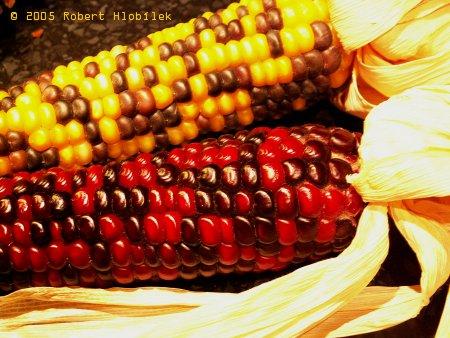 Kukuřičný mix