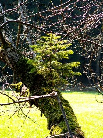 Strom na stromě