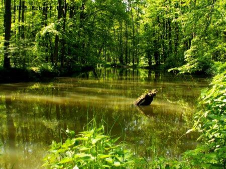 Lesní jezera