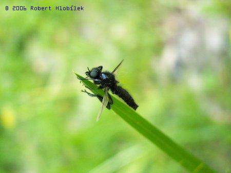Mini vážka
