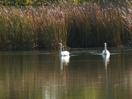 Přírodní rezervace Polanská niva