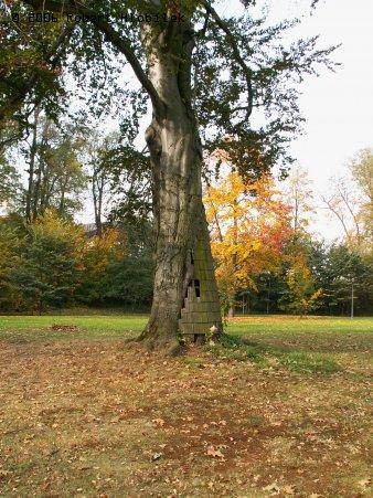 Opravený strom v zámeckém parku Bartošovice